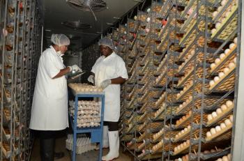 Jamaica Broilers Group Ltd_6